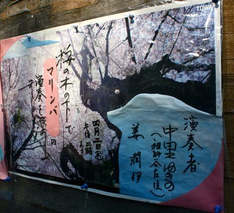 桜の木の下で  涙…。_f0170519_17355352.jpg