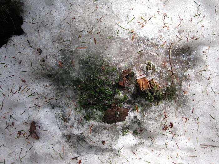 2010年4月13日の写真ー登山道_e0155231_18104351.jpg