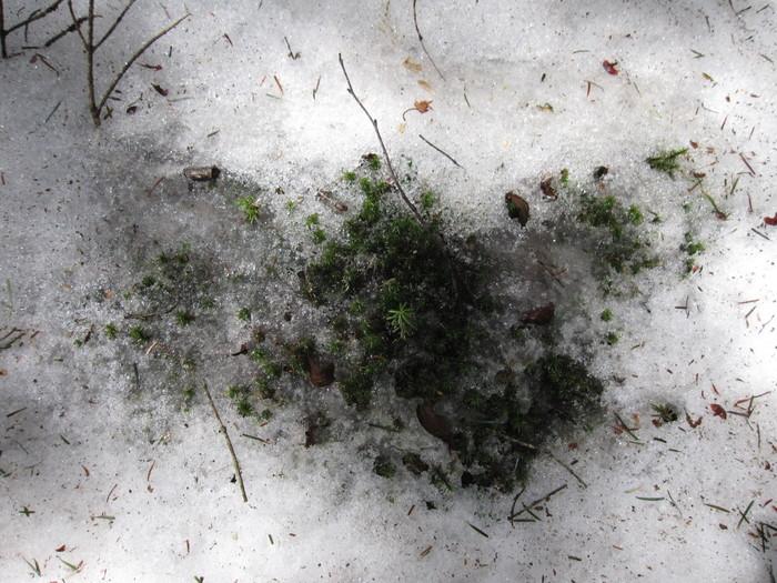 2010年4月13日の写真ー登山道_e0155231_18113198.jpg