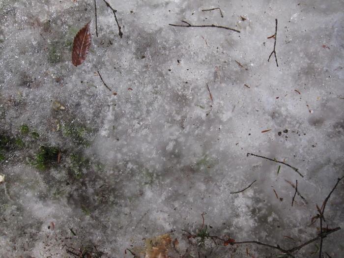 2010年4月13日の写真ー登山道_e0155231_18121580.jpg