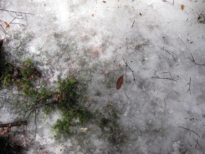 2010年4月13日の写真ー登山道_e0155231_18125765.jpg