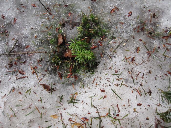 2010年4月13日の写真ー登山道_e0155231_1814068.jpg