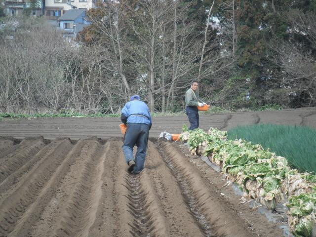 それぞれの畝作り・・発芽・・・新しい生命の誕生_c0222448_11585637.jpg