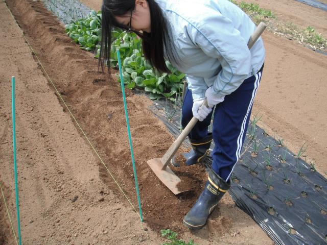 それぞれの畝作り・・発芽・・・新しい生命の誕生_c0222448_11591869.jpg