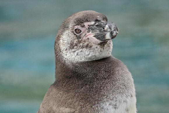 ペンギン大合唱♪_d0227252_17433826.jpg