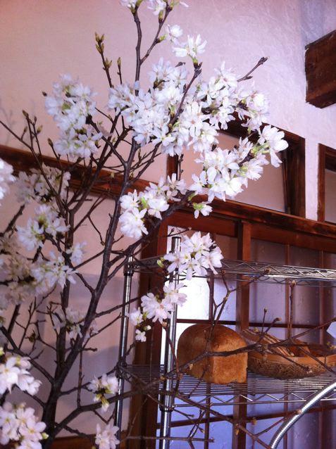 工房にも春がやってきました。_c0216265_22503756.jpg