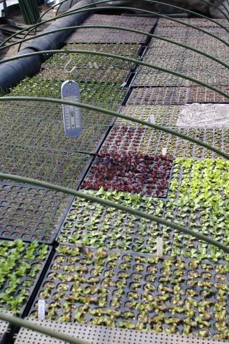 葉物たちの発芽、ニンジンのタネまき_c0110869_21565948.jpg