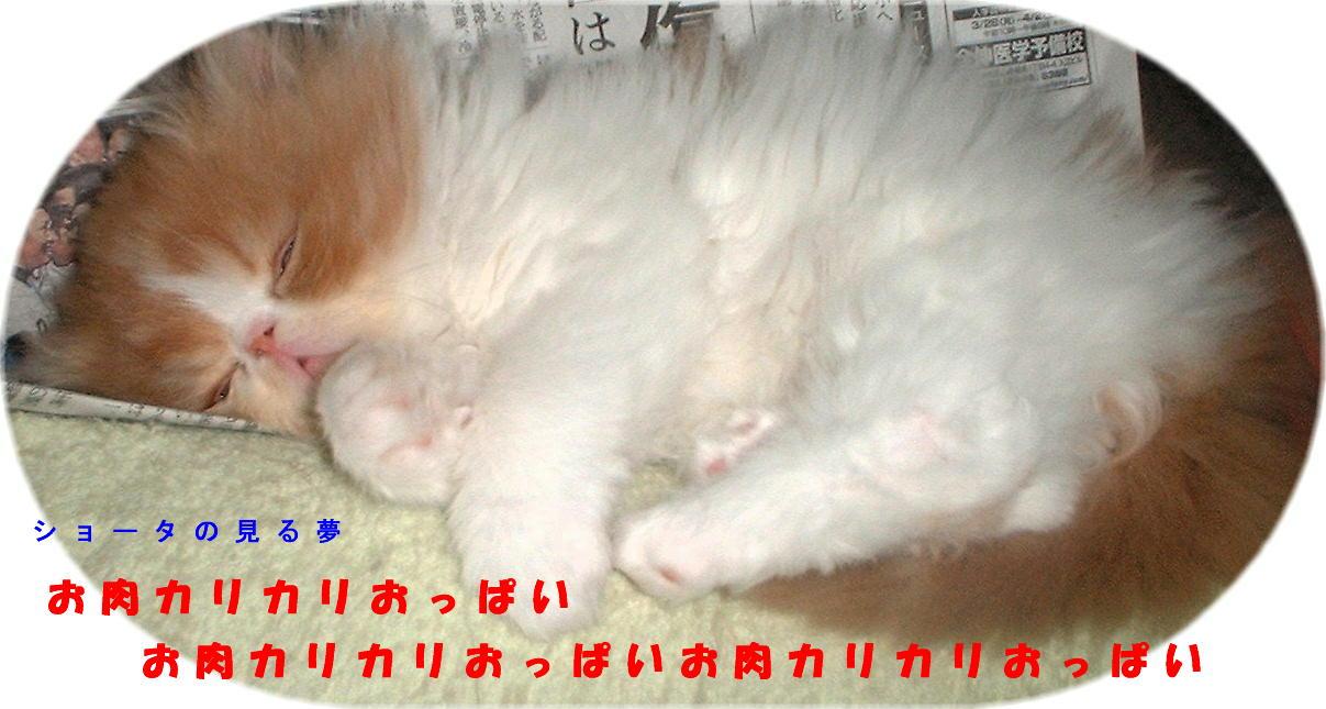 b0077177_1304093.jpg