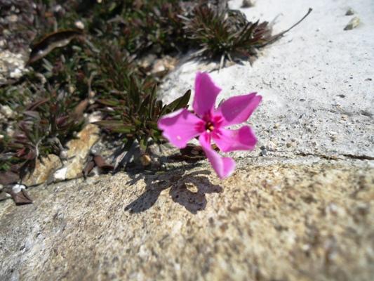 春をみつけた_a0199979_1356466.jpg