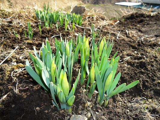 春をみつけた_a0199979_1359911.jpg
