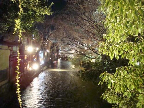 桜(その②)_f0201286_9263076.jpg