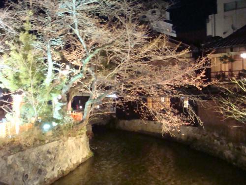 桜(その②)_f0201286_9265334.jpg