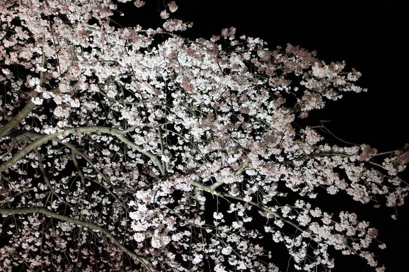 祇園・白川ライトアップ_d0217090_071691.jpg