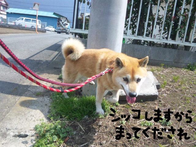 UKC JAPAN ボランティア★平日の人手が足りません★_d0187891_10915.jpg