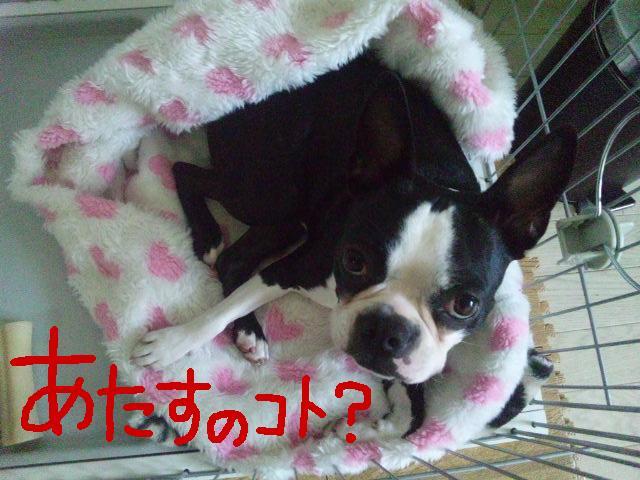 UKC JAPAN ボランティア★平日の人手が足りません★_d0187891_1091976.jpg