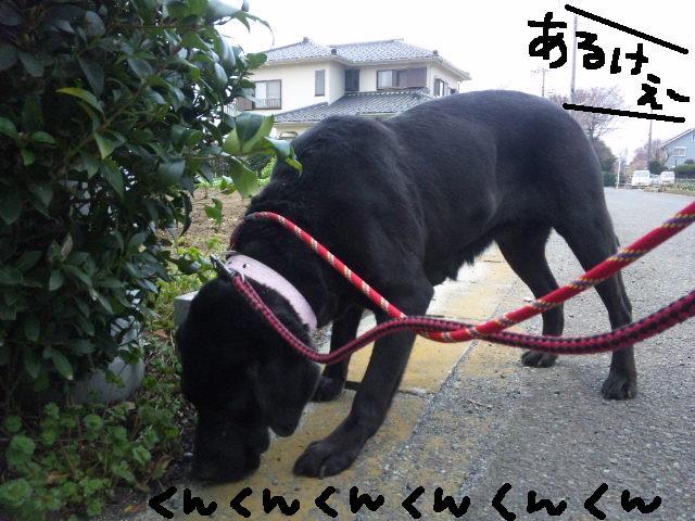 UKC JAPAN ボランティア★平日の人手が足りません★_d0187891_109946.jpg