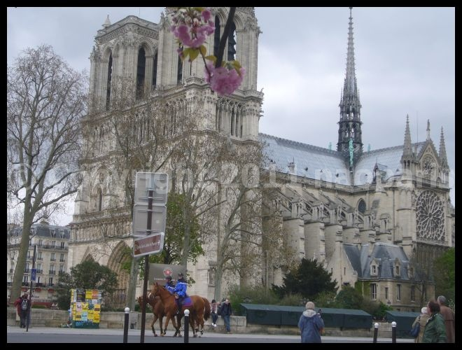 【サクラSAKURA】3月31日ノートルダム界隈(PARIS)_a0008105_23324132.jpg
