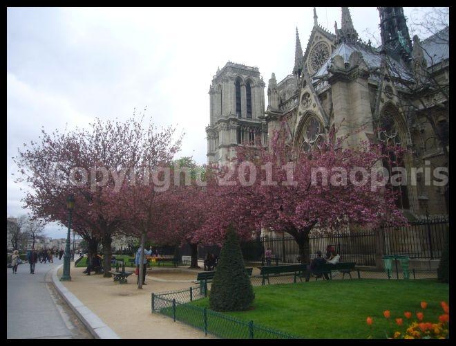 【サクラSAKURA】3月31日ノートルダム界隈(PARIS)_a0008105_23345750.jpg