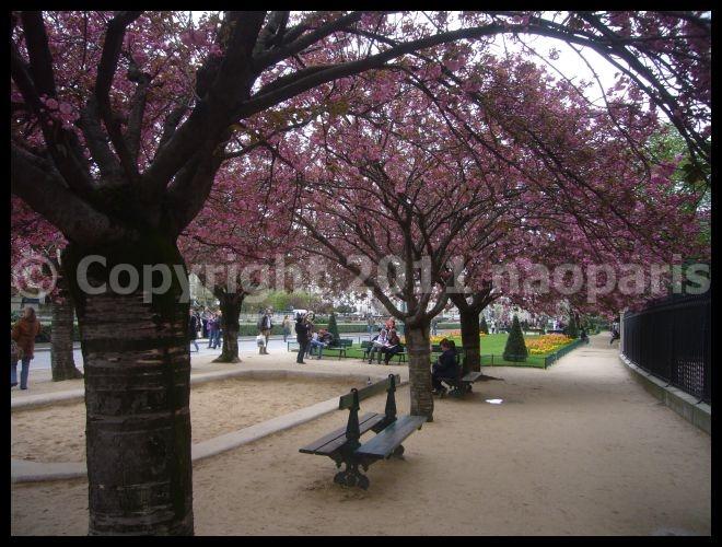 【サクラSAKURA】3月31日ノートルダム界隈(PARIS)_a0008105_23354015.jpg