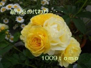 d0170109_23315641.jpg