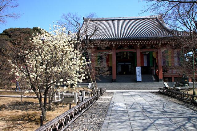 京の花だより 智積院_e0048413_2082345.jpg