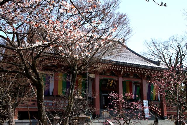 京の花だより 智積院_e0048413_2083659.jpg