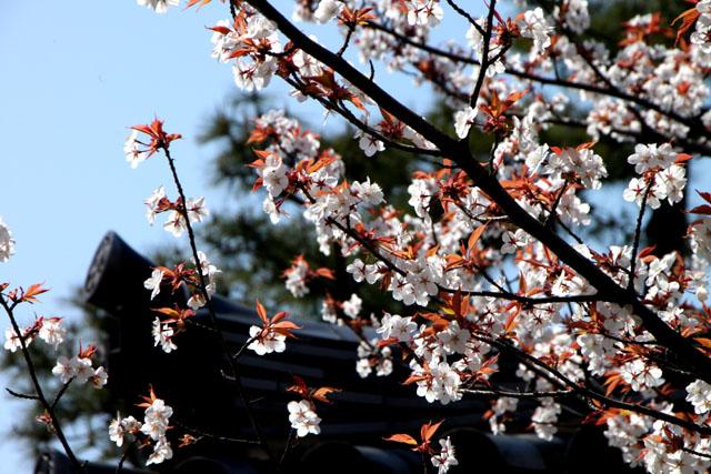 京の花だより 智積院_e0048413_2084958.jpg
