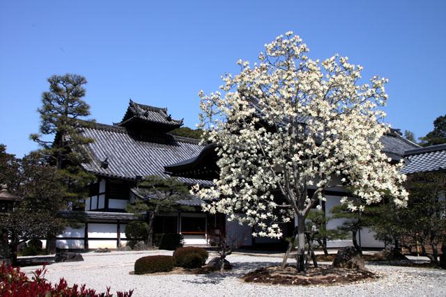 京の花だより 智積院_e0048413_2091447.jpg