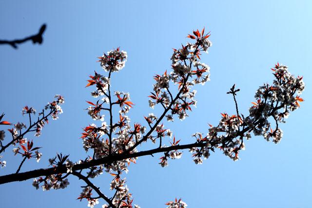 京の花だより 智積院_e0048413_209170.jpg
