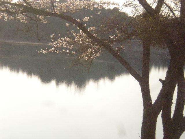 2011年ggv日田「花見Gathering」~~_a0125419_23242337.jpg