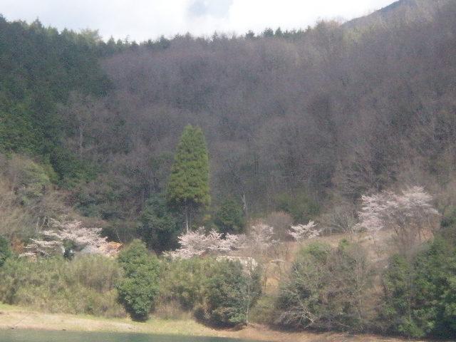 2011年ggv日田「花見Gathering」~~_a0125419_23245251.jpg