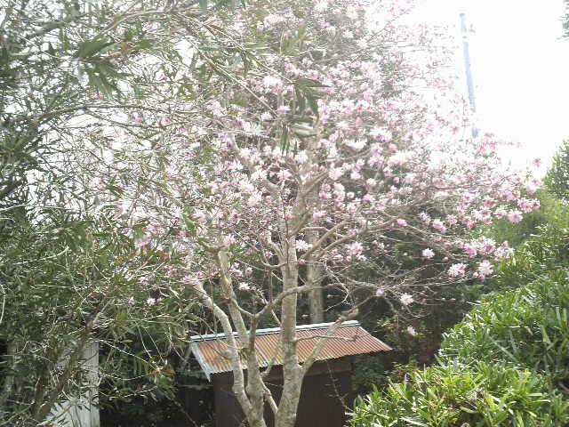 春なのです_b0100432_2224390.jpg
