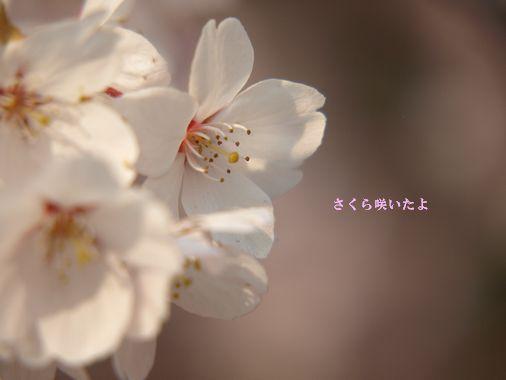 c0148238_037362.jpg