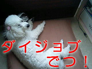 c0117239_1011055.jpg