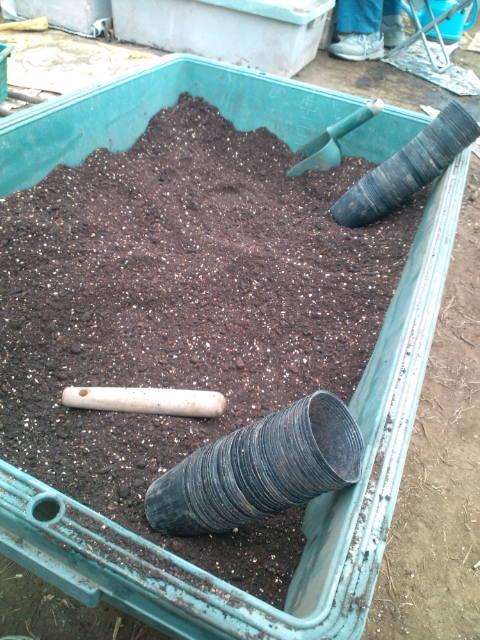 今朝はズッキーニの鉢上げと蔓なし隠元豆の定植です_c0222448_19522625.jpg