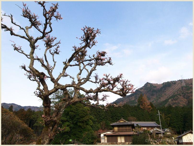 枯れ木に花を咲かせましょう GRDIII_e0063851_0261596.jpg