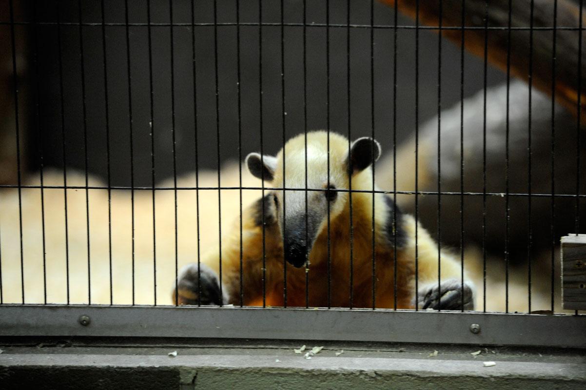 今日パンダに・・・会わなかった_b0023856_1916920.jpg