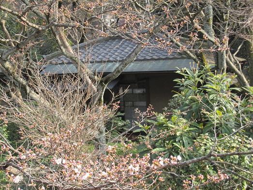 2011年4月3日 桜実況中継_c0078659_17372367.jpg