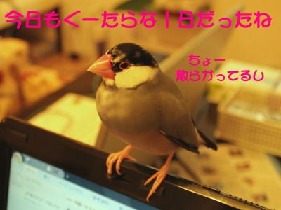 b0158061_21131854.jpg