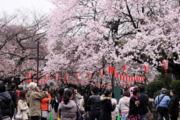 2011.4.3(日)上野_f0230666_23315760.jpg