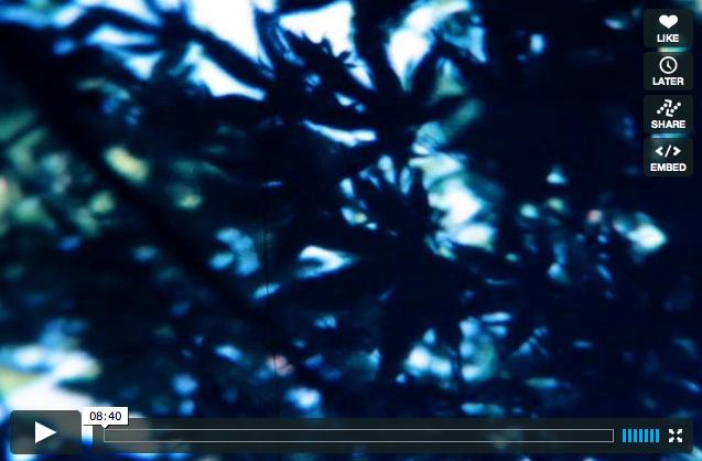 島田量平×SJQのコラボ作品[garden]リリース。_d0148069_16585450.jpg
