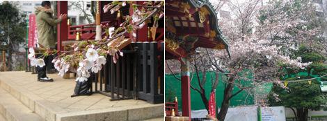 金王桜と未だに残る震災の爪痕、そして「てんでんこ」_d0183174_8364848.jpg
