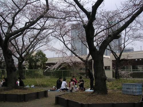幸ヶ谷公園の桜_e0017093_1694439.jpg