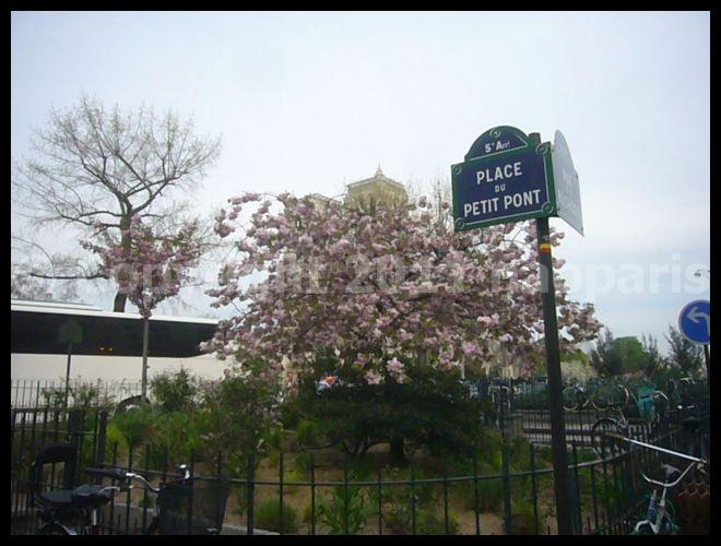 【サクラ】ノートルダム界隈4月2日(PARIS)_a0008105_1821967.jpg