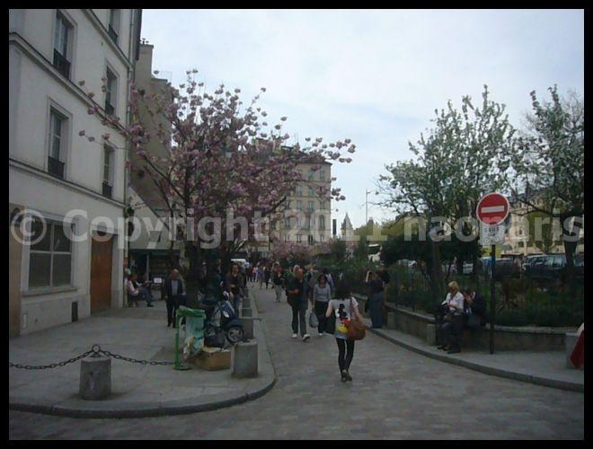 【サクラ】ノートルダム界隈4月2日(PARIS)_a0008105_183128.jpg