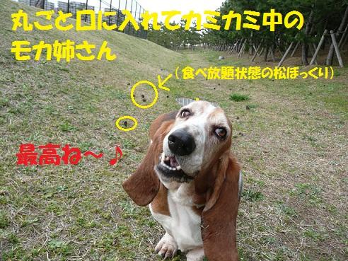 f0121712_856431.jpg