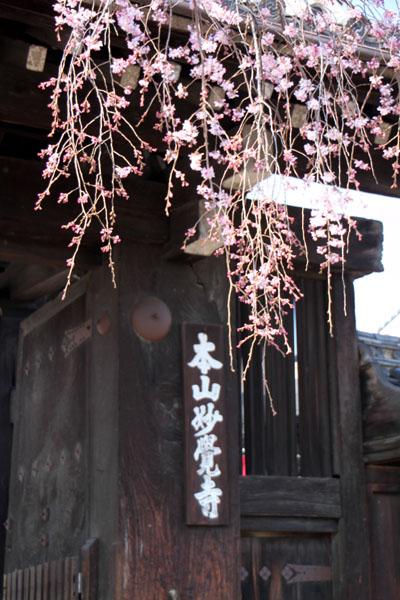 京の花だより 妙覚寺_e0048413_21153372.jpg