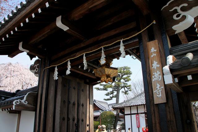 京の花だより 本満寺_e0048413_21431919.jpg