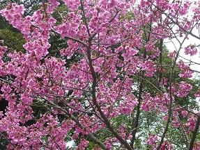 春のお花_a0177314_0142564.jpg