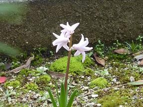 春のお花_a0177314_016771.jpg